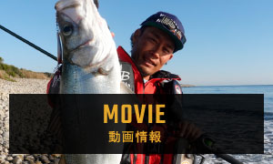 MOVIE 動画情報