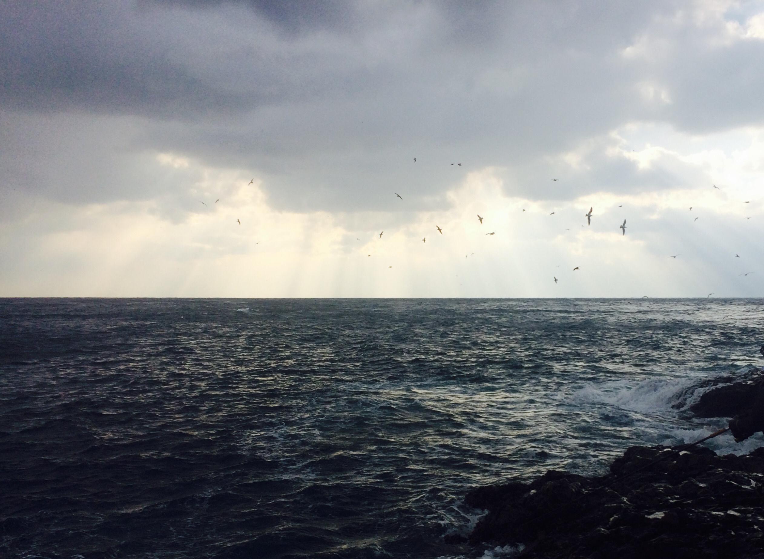 ②鳥山入り写真